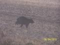 bear-running-matt